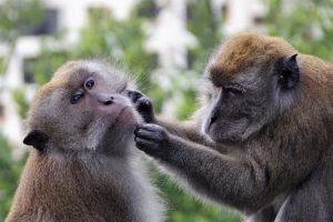 פארק קופים